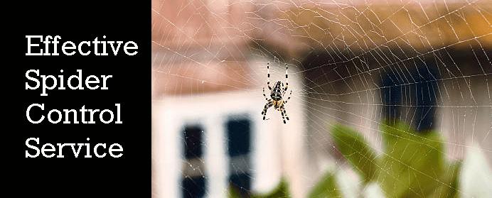 Effective Spider Control Service