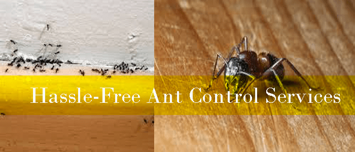 Hassle-Free Ant Control Services